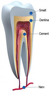 Smaltul dintilor